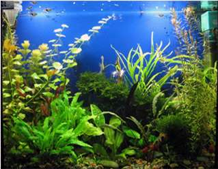 Растения для аквариума. виды водорослей.