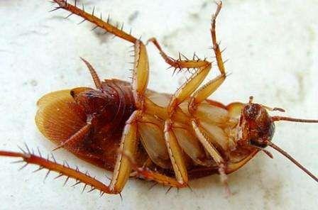 Дезинсекция, уничтожение тараканов и вредных насекомых.