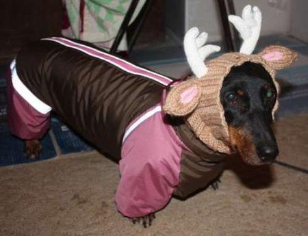 Бизнес-идея: открыть производство одежды для собак