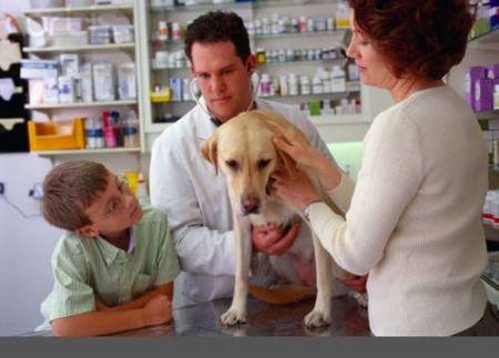 veterinar-sobaka
